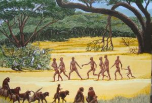 Early man painting of Homo Habilus watched by his primate cousins, Baboons and Vervet Monkeys.