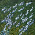 Zebras in the long grass of Okavango Delta in Botswana Painting